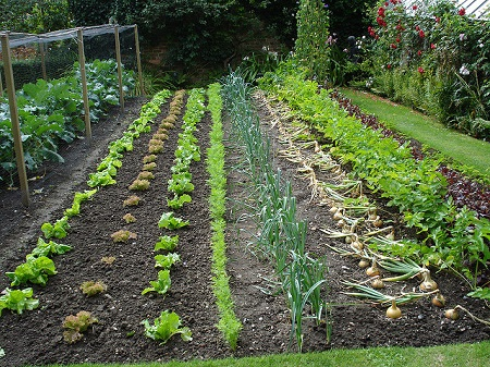 Community garden ribbon cutting for Low maintenance gardens for the elderly