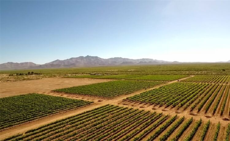 Yes, there are wineries in Arizona!